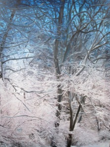 Winter Forest Mixed Media- Photography and Oil on Canvas